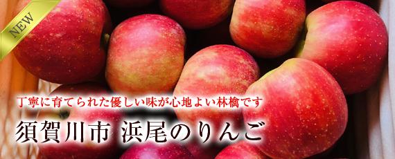 丁寧に育てられた優しい味が心地よい林檎です。須賀川市 浜尾のりんご