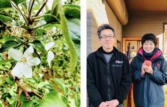 須賀川市 浜尾のりんご